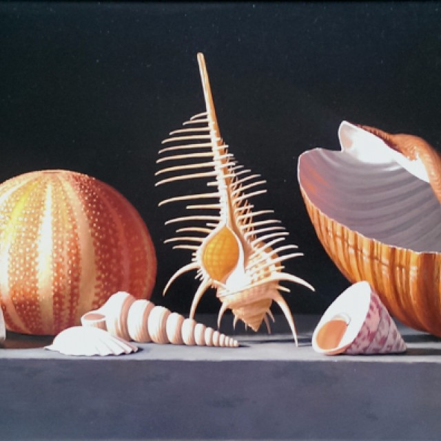 Sea Urchin with Venus Comb and Tonna Shell