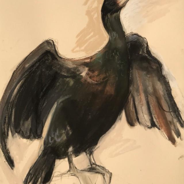 Cormorant, drying wings